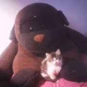 photo d'un chat assis sur un singe en peluche