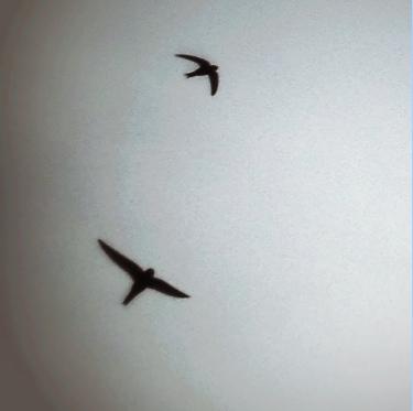 Photo de deux oiseaux sombres dans un ciel gris lumineux