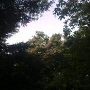 Photo du feuillage dans une forêt avec un bout de ciel clair