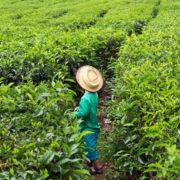 Photo d'un paysan avec un grand chapeau dans un champ cultivé