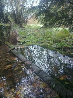 Photo d'une petite mare où flottent des feuilles mortes traversée par une planche de bois, avec quelques arbres en arrière-plan