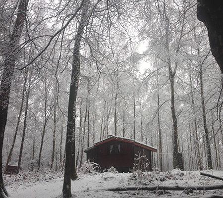 Photo d'une cabane au milieu de la forêt