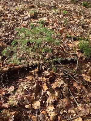 Photo d'un tapis de feuilles mortes avec au milieu une petite plante