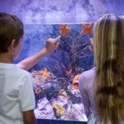 Photo de deux enfants de dos, pointant du doigt deux étoiles de mer qu'ils voient en face d'eux dans un gran aquarium