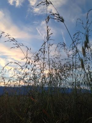 Photo prise à contre-jour de quelques plantes à tige fine sur fond de ciel nuageux bleuté