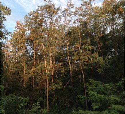 Photo d'un petit bois d'arbres minces s'élançant vers le ciel entourés d'une végétation touffue