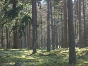 Photo d'une forêt au sol très vert éclairée par les rayons du soleil
