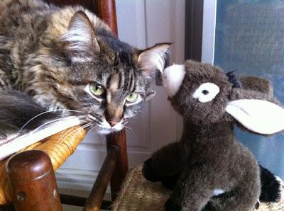 Photo d'un chat semblant écouter ce qui lui chuchote à l'oreille un animal en peluche