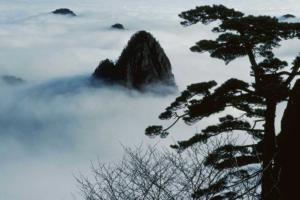 Paysage de montagne et arbre apparaissant du brouillard