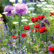 jardi-2Bmeditation