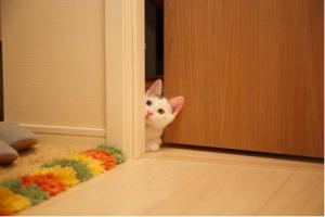 Photo d'un chat passant la tête par une porte entrebaillée