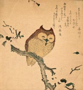 dessin japonais ancien de chouette sur une branche