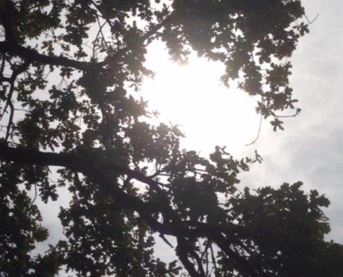 Photographie prise sous la frondaison d'un arbre filtrant les rayons du soleil