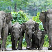 Photographie d'un groupe d'éléphants en marche vu de face.