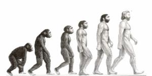 Dessin montrant l'évolution du singe à l'homme.