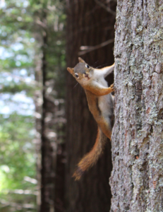 Photographie d'un écureuil sur un tronc d'arbre