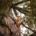 Photographie d'un écureuil au milieu d'une frondaison