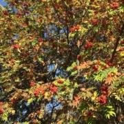 Photographie de la frondaison d'un arbre à la fin de l'été.