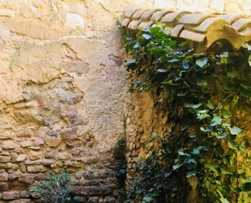 Photographie d'un mur avec du lierre grimpant dessus.