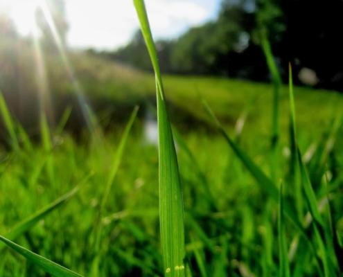 Photographie d'un brun d'herbe, parmi d'autres...