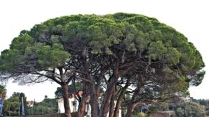 Photo d'arbres, devant un paysage urbain