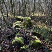 Photo d'un sol de forêt