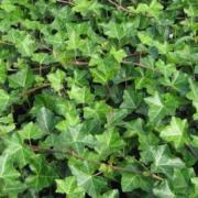 Image d'un ensemble de végétaux