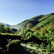 Photo de Cerasuolo, 25 avril 2016