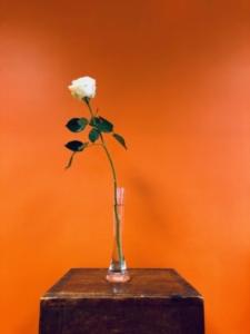 Photo d'une rose blanche dans un soliflor sur un fond orangé