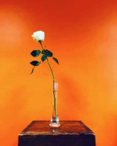 Photo d'un rose blanche dans un soliflor sur fond orangé